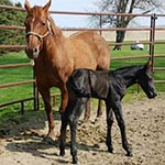 How We Start Our Morning on the Farm - Baby Stud Colt Born by Debbie Fangman